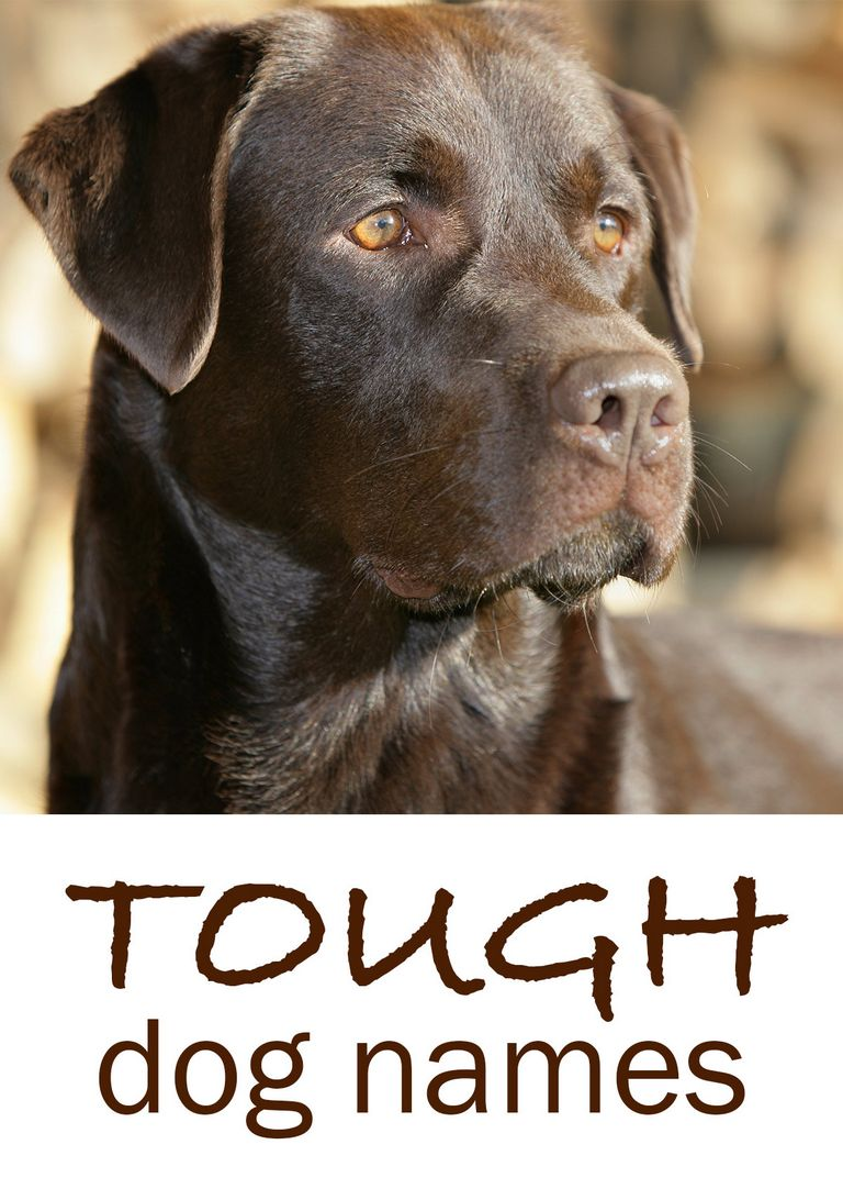 Strong Female Dog Names And Meanings