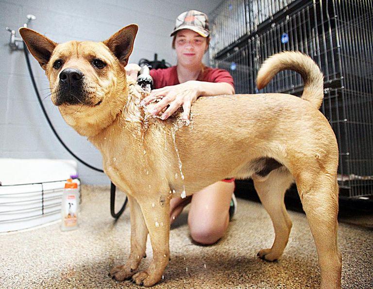 Sv Animal Shelter
