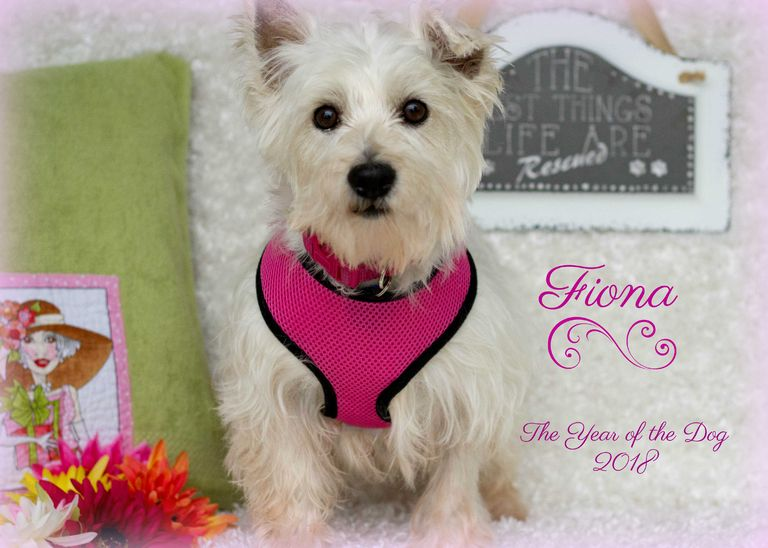 Terrier Rescue Omaha