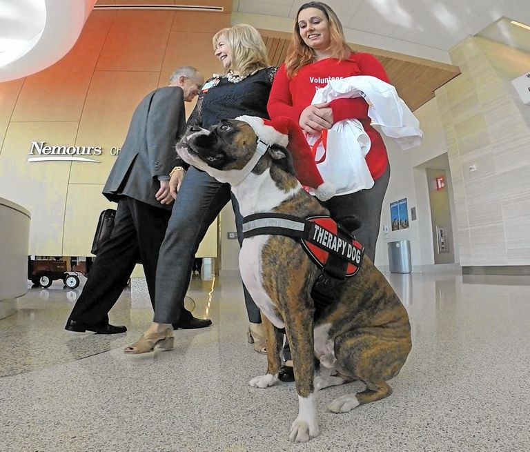 Therapy Dog Certification Florida