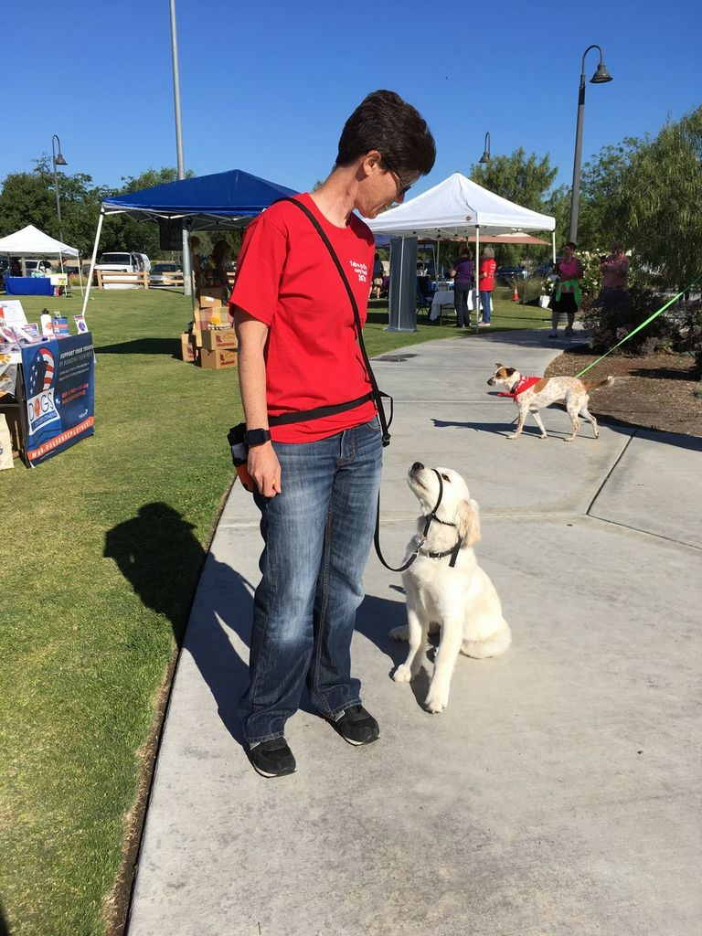 Therapy Dog Organizations Near Me