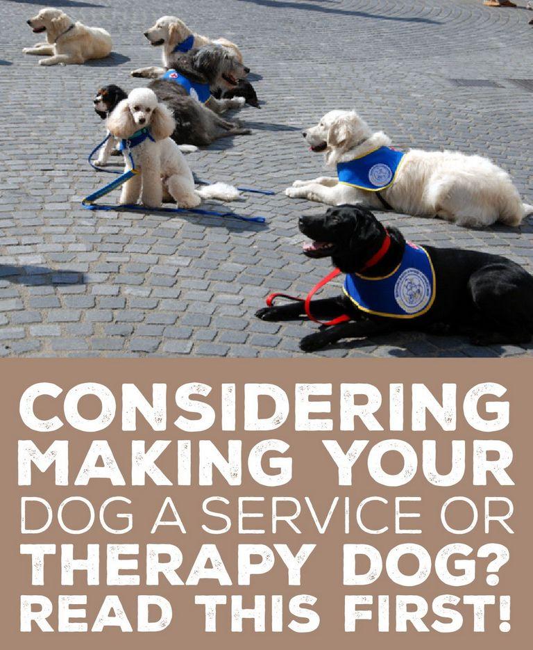 Therapy Dog Training Schools