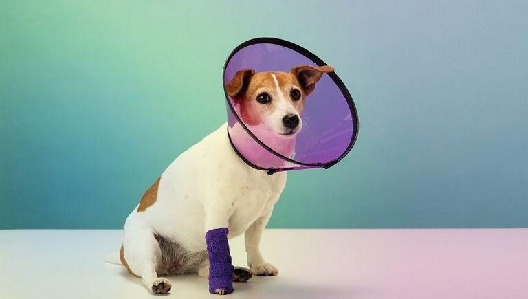 Tramadol Dog Dosage Per Pound