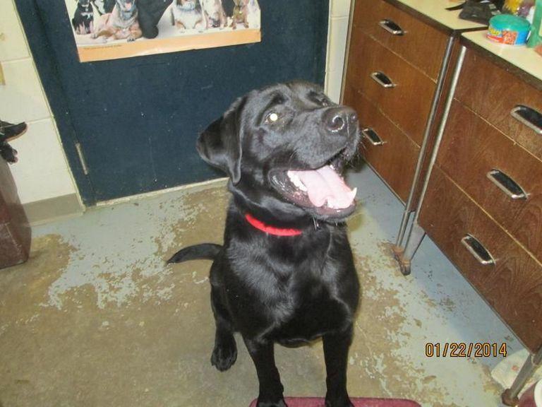 Tuscarawas County Dog Pound