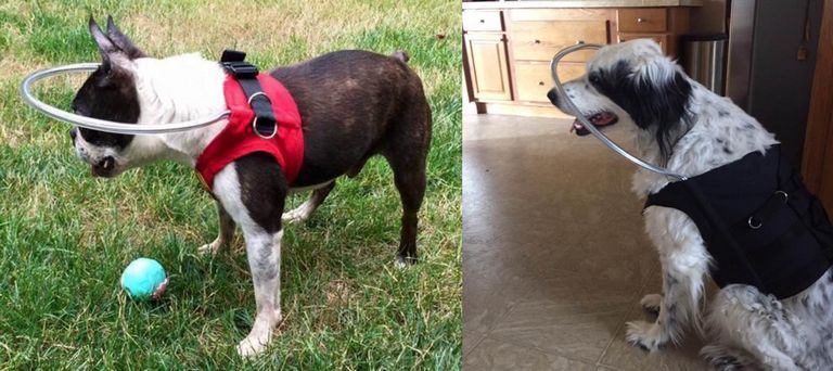 Visually Impaired Dog Vest