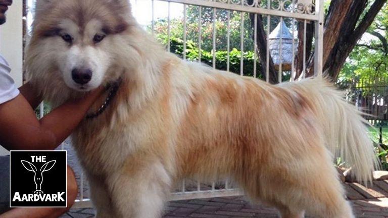 Vt Dog Rescue Facebook