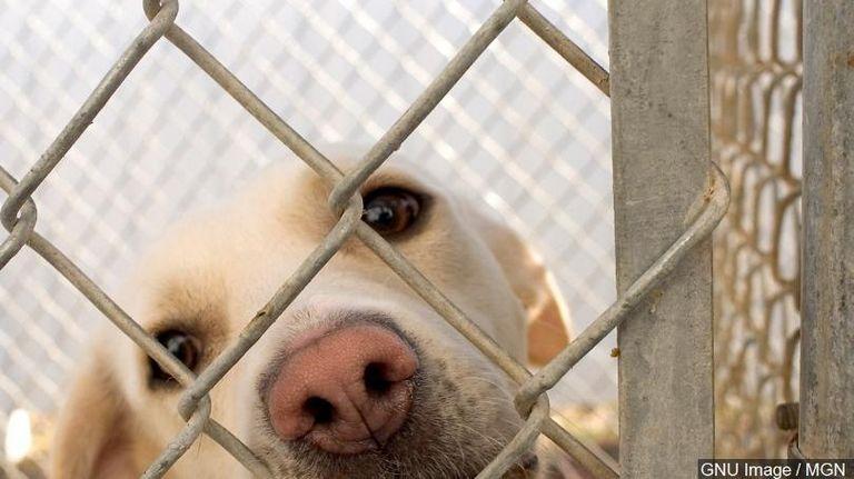 Watford Nd Animal Shelter