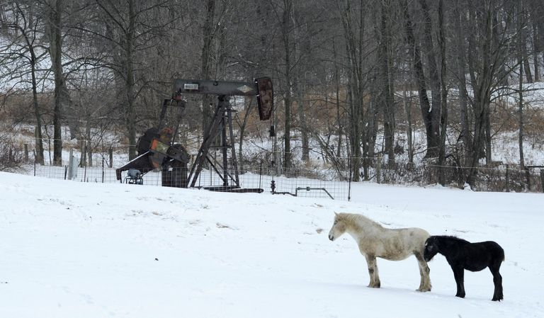 Wayne County Dog Pound