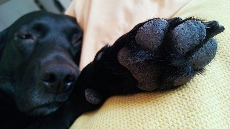 Webbed Dog Feet Vs Non Webbed
