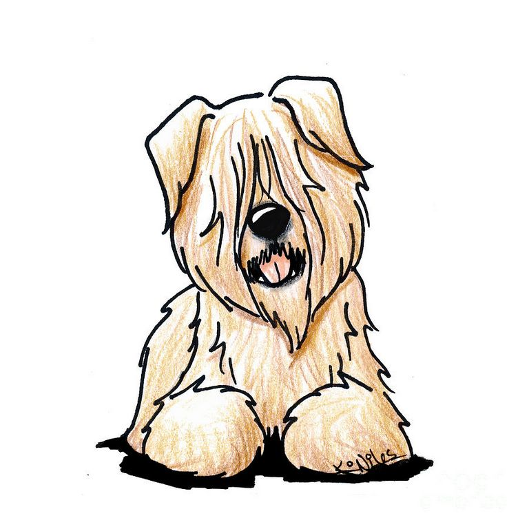 Wheaten Terrier Michigan