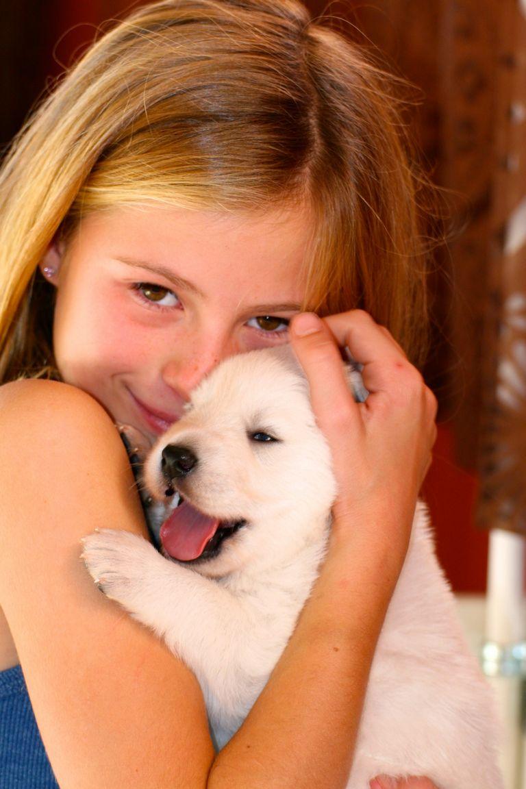 White German Shepherd Rescue Az