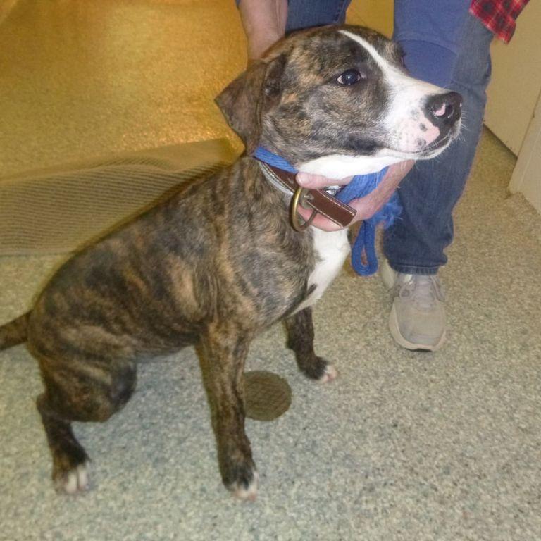 Wilkes County Humane Society