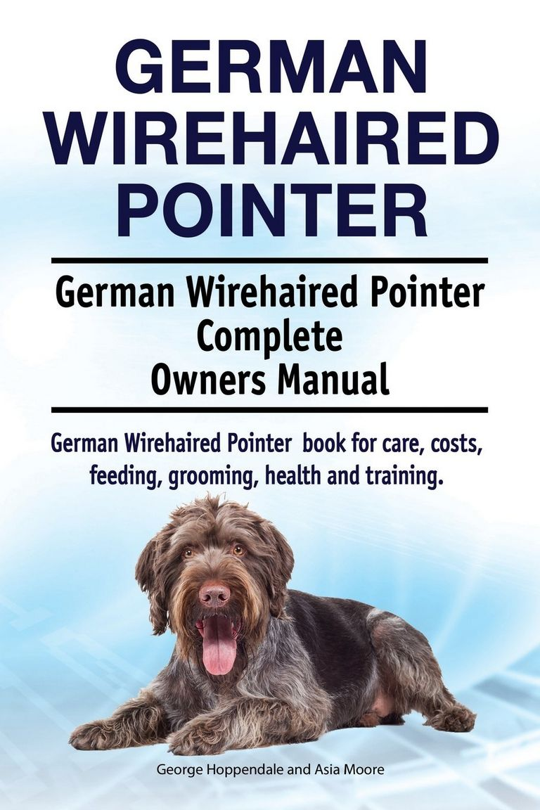 Wirehaired Pointing Griffon Puppies For Sale 2018