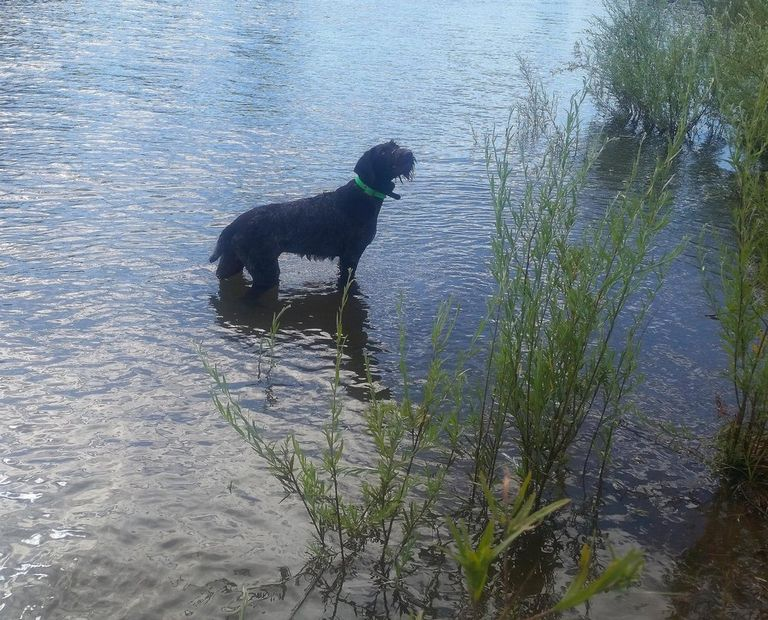 Wirehaired Puppies For Sale In Mn