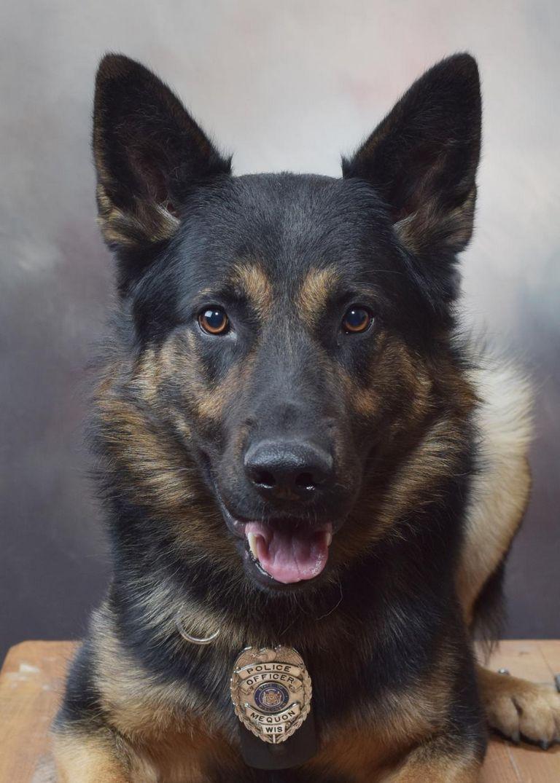 Wisconsin Dog Training