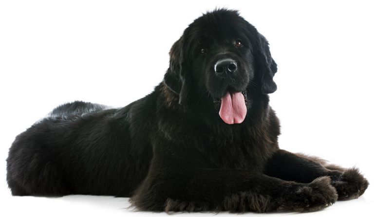 World's Deadliest Dog Breed