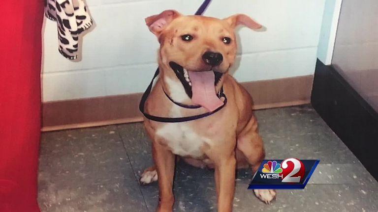 Worst Dog Breeds For Seniors