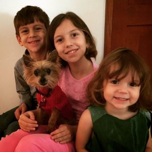 Yorkie Breeders In Southern California