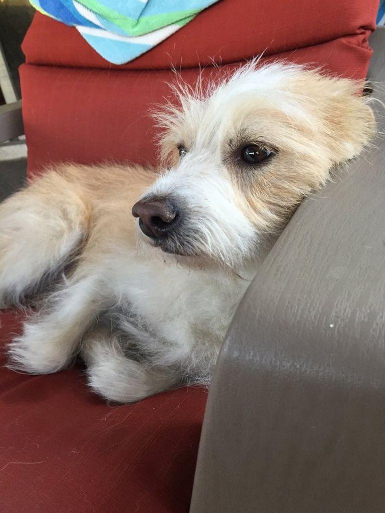 Zinc Deficiency In Dogs Uk